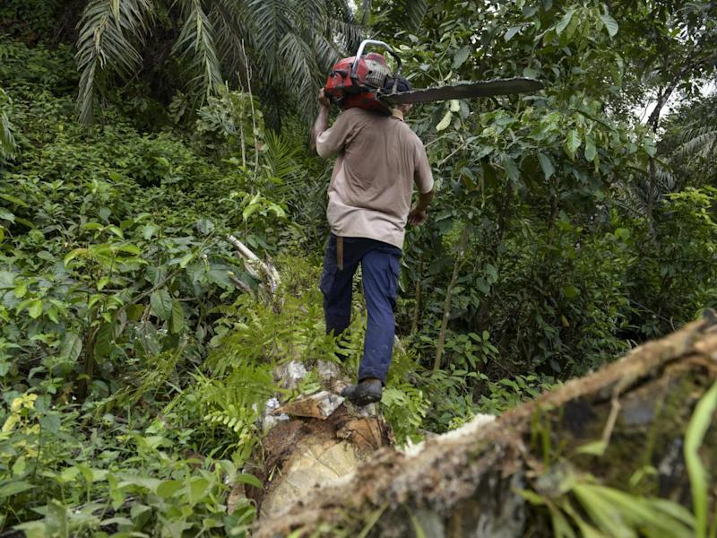 It's a jungle out there: deforestation for food production is a massive problem (AFP/Getty)