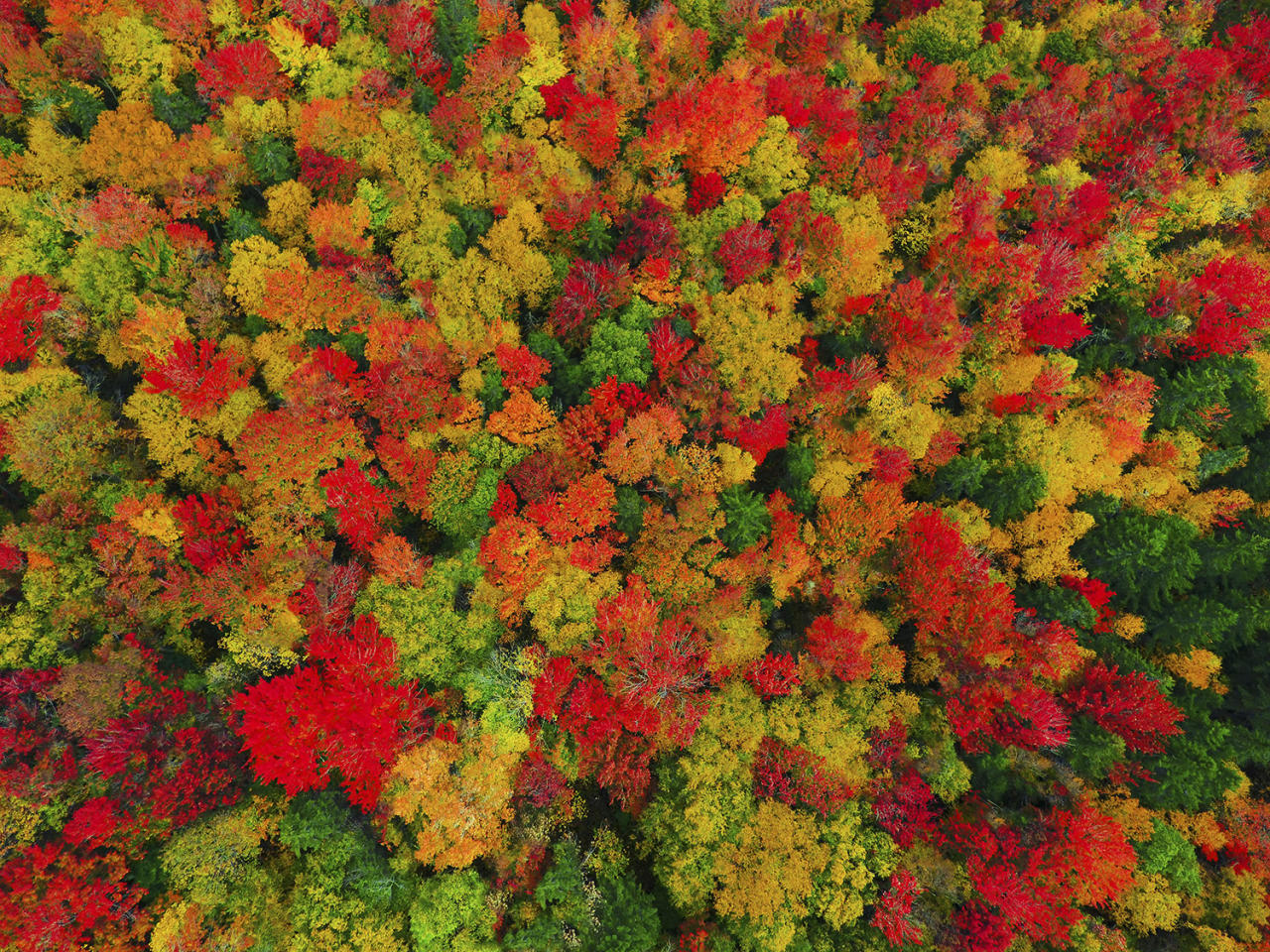 <p>This beautiful autumn landscape comes to life as the leaves change color ready for fall. (Photo: Matt Benedetto/Caters News) </p>