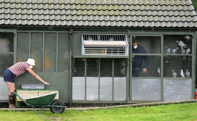 Employees box and load racing pigeons for the One Loft race at Birtsmorton, central England August 25, 2012. 1200 pigeons are entered in the loft during March for £100 ($160) each and then trained by loft keeper Jeremy Davies. The race from Hexham to Birtsmorton is 203 miles (327 km), taking the winning bird around 4 to 5 hours with prize money totalling £55,000 ($87,000) and the winner receiving £20,000 ($31,600).