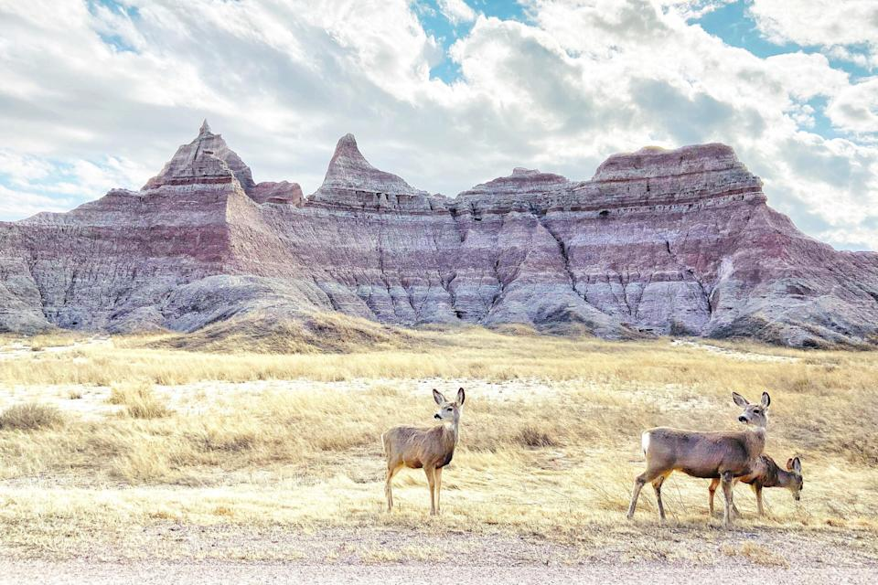 "<p><strong>Best thing to do in South Dakota:</strong> Experience the beauty of the Badlands</p> <p>With stiff competition like <a href=""https://www.cntraveler.com/gallery/the-best-airbnb-rentals-near-yosemite-national-park?mbid=synd_yahoo_rss"" rel=""nofollow noopener"" target=""_blank"" data-ylk=""slk:Yosemite"" class=""link rapid-noclick-resp"">Yosemite</a> and <a href=""https://www.cntraveler.com/story/what-yellowstones-phased-reopening-means-for-summer-travel?mbid=synd_yahoo_rss"" rel=""nofollow noopener"" target=""_blank"" data-ylk=""slk:Yellowstone"" class=""link rapid-noclick-resp"">Yellowstone</a>, the Badlands of South Dakota may not be your first choice when it comes to camping in a national park. But its two campgrounds (Cedar Pass and Sage Creek) are open year-round, offering regular access to the largest stretch of prairie wilderness in the country—home to roaming bison and sheep—and one of the most spectacular night skies you may ever see.</p>"