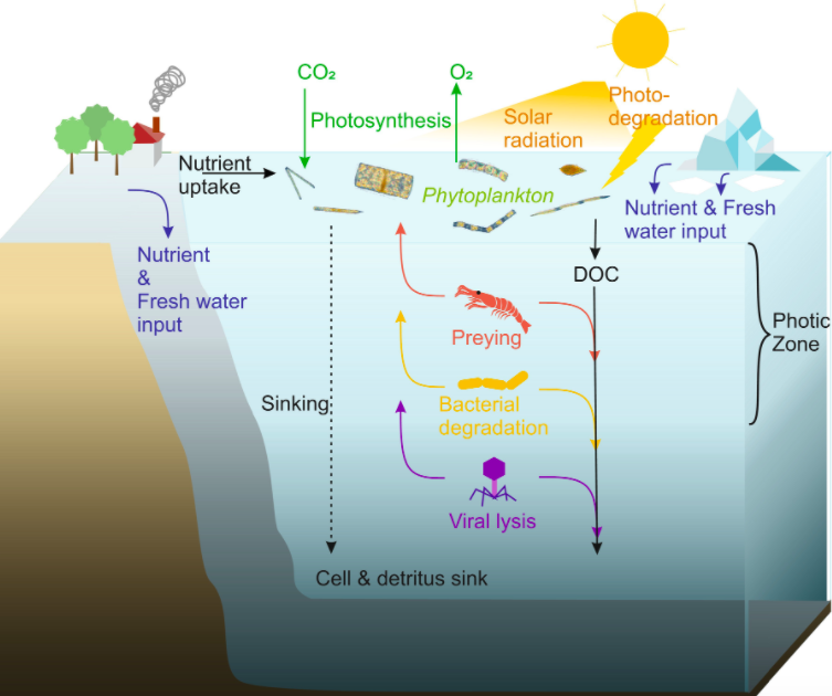 ocean nutrient cycling wiki CC BY 4.0