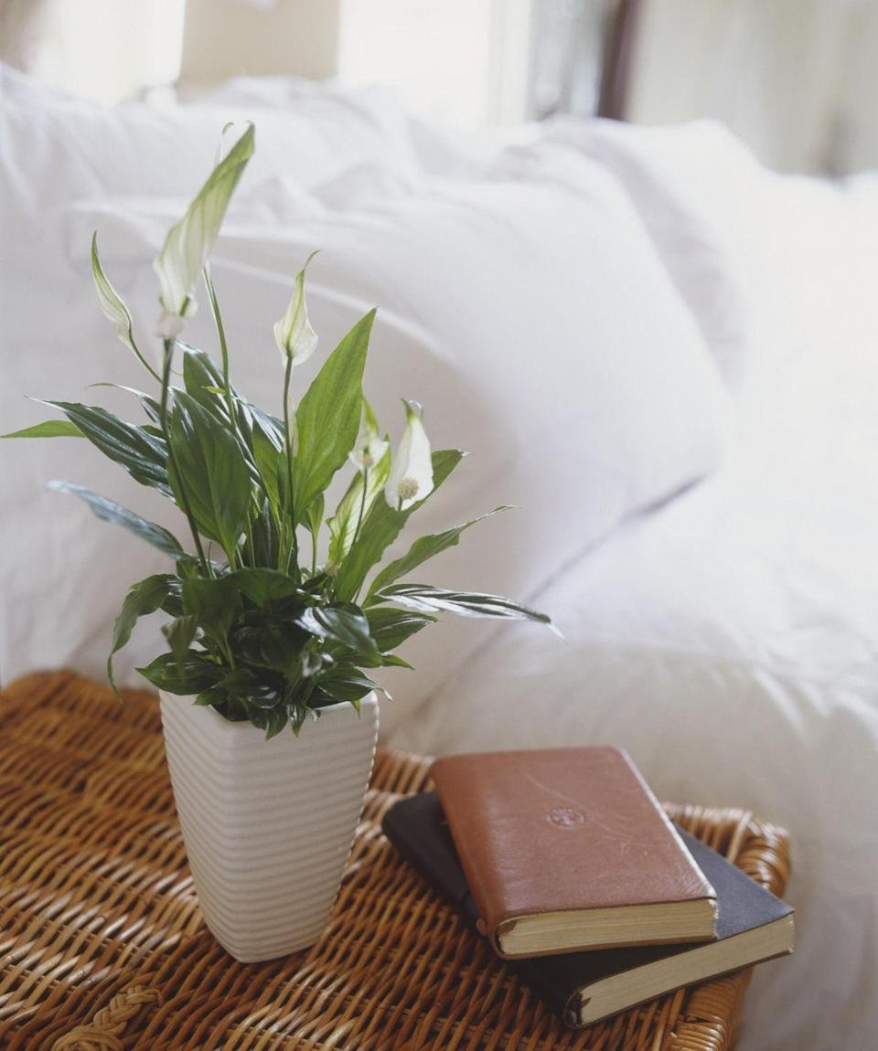 """<p>If you often forget to water your plants, pick up one of these <a href=""""http://www.gardeningknowhow.com/houseplants/hpgen/indoor-plants-that-need-low-light.htm"""" rel=""""nofollow noopener"""" target=""""_blank"""" data-ylk=""""slk:low-maintenance ones"""" class=""""link rapid-noclick-resp"""">low-maintenance ones</a>: It actually needs to dry out between waterings, meaning you can wait longer.</p>"""