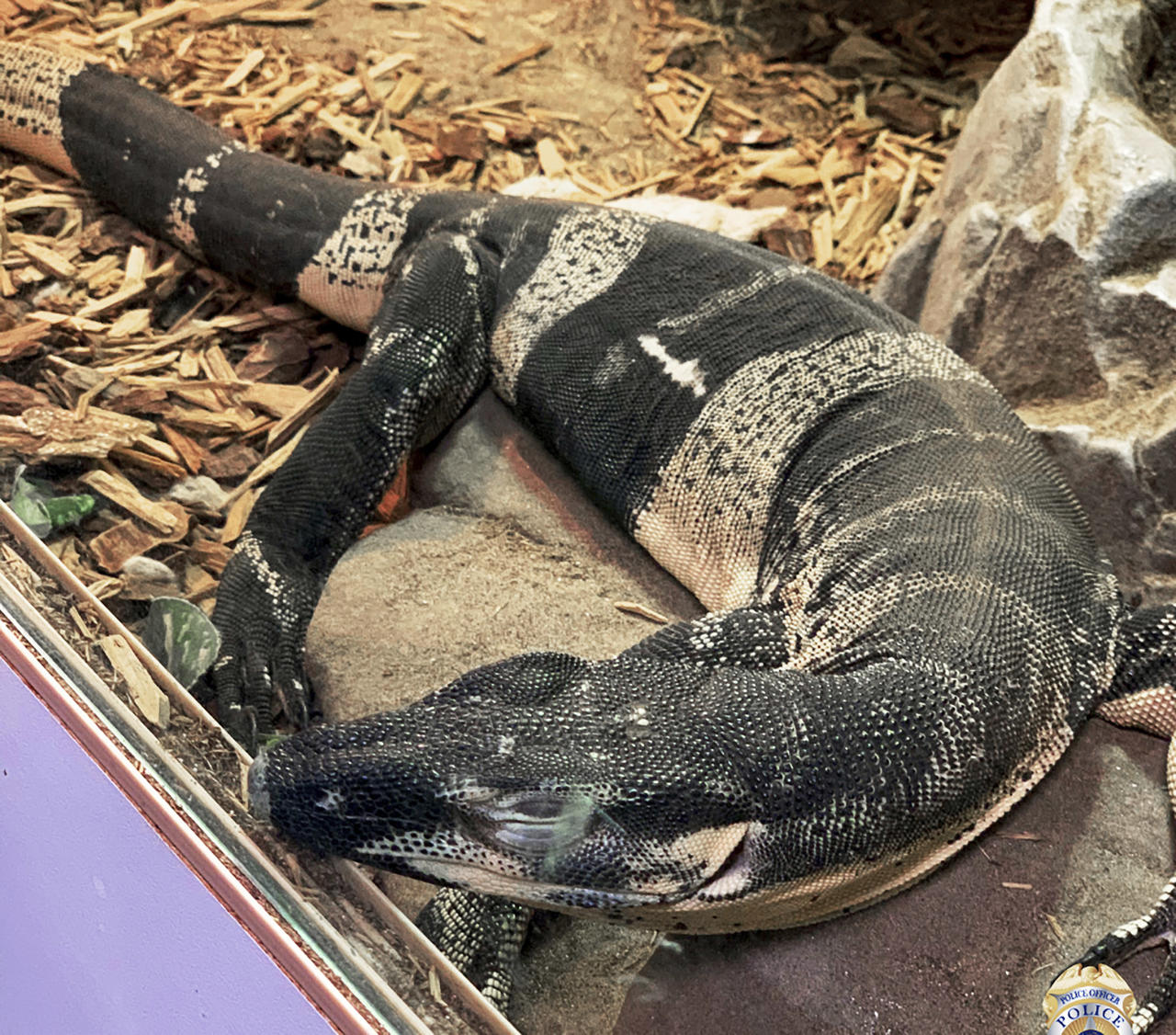 California police recover lizards stolen from reptile store