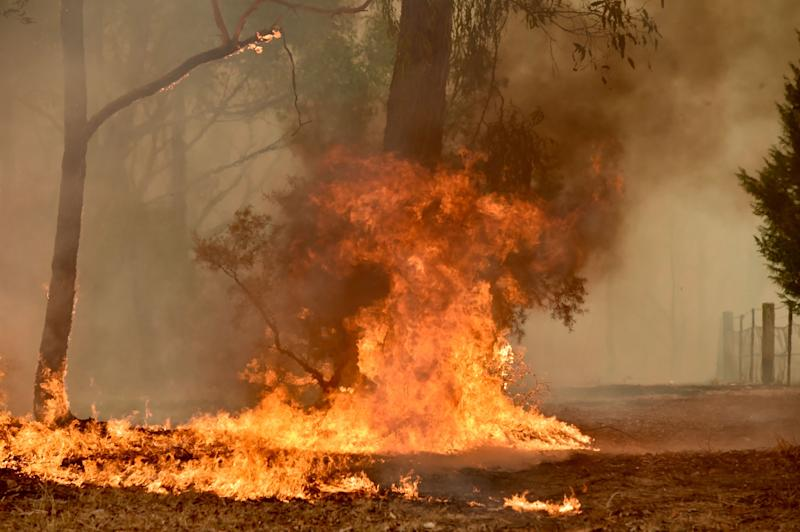 Pictured is a bushfire climbing a tree on a Balmoral property.