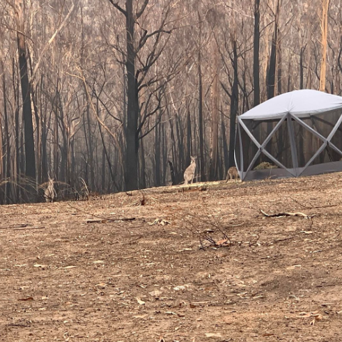 Surviving kangaroos group around tents which contain food for the starving animals. Source: Wild2Free