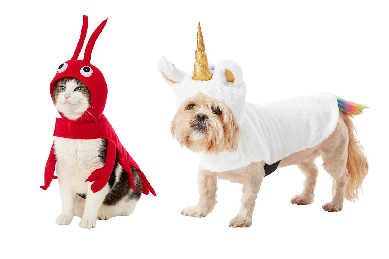 Halloween is approaching! You have a little over a month to make sure your pet is ready for the year's spookiest and sweetest holiday.   Chewy has made it easy for pet parents to deck out their furry friends in head-turning Halloween looks. The online pet supply retailer just released their new cat and dog Halloween costumes for 2019. Read on to find the perfect outfit for your pet and get their Halloween shopping done right now.   The best part? Almost all of these costumes are available for dogs and cats!