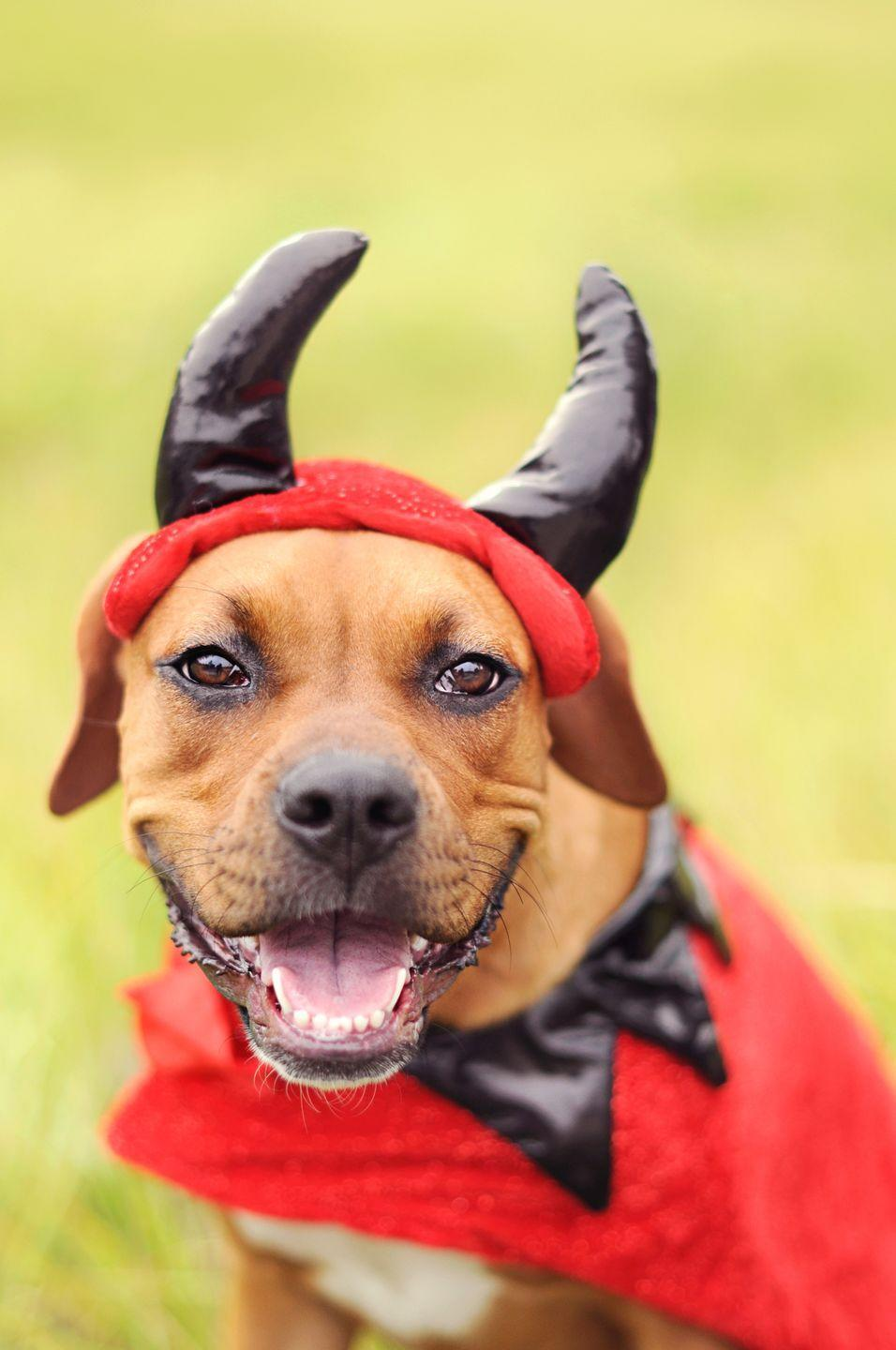 """<p>Invite over all the dogs on your block and ask their parents to <a href=""""https://www.oprahmag.com/life/g28714689/funny-dog-halloween-costumes/"""" rel=""""nofollow noopener"""" target=""""_blank"""" data-ylk=""""slk:dress them in their Halloween best"""" class=""""link rapid-noclick-resp"""">dress them in their Halloween best</a>. Set out bowls of water and treats for your furry friends—and maybe some snacks and sweets for the human party goers, too. Winner of the costume contest takes home a new toy! </p><p><a class=""""link rapid-noclick-resp"""" href=""""https://www.amazon.com/Midlee-Pumpkin-Find-Toy-Halloween/dp/B01KKUJ7H6/?tag=syn-yahoo-20&ascsubtag=%5Bartid%7C10072.g.28787574%5Bsrc%7Cyahoo-us"""" rel=""""nofollow noopener"""" target=""""_blank"""" data-ylk=""""slk:SHOP HALLOWEEN DOG TOYS"""">SHOP HALLOWEEN DOG TOYS</a></p>"""