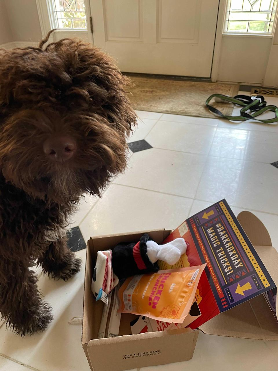 "<h2><h2>Monthly Barkbox Subscription</h2></h2><br>""The first thing I did after bringing Lucca home was sign up for Barkbox. Do I think I need new toys each month for one dog for the rest of his life? No. Do I think I need new toys each month for one dog for the first 6 months in his new home? Absolutely. So far, we've gotten four boxes and each one has come with its own incredibly charming theme and nutritious delicious treats. A Barkbox subscription is also a fun idea to gift a new dog parent in your life. I mean, look how happy he is."" — <em>Morgan</em><br><br><strong>Barkbox</strong> Barkbox Subscription Box, $, available at <a href=""https://go.skimresources.com/?id=30283X879131&url=https%3A%2F%2Fwww.barkbox.com%2Fsubscribe%2F"" rel=""nofollow noopener"" target=""_blank"" data-ylk=""slk:BarkBox"" class=""link rapid-noclick-resp"">BarkBox</a>"