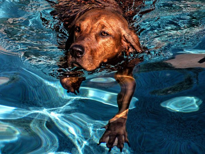 Even if your dog can swim, don't leave them alone near a pool.