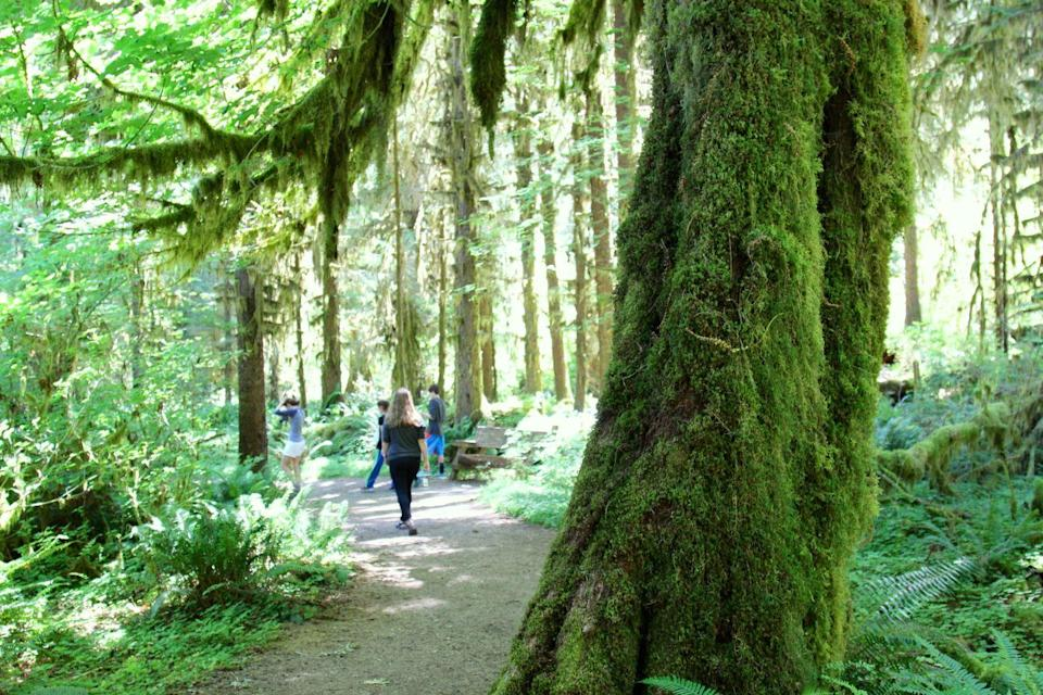 """<p>The <a href=""""https://www.tripadvisor.com/Attraction_Review-g143047-d104771-Reviews-Hoh_Rain_Forest-Olympic_National_Park_Washington.html"""" rel=""""nofollow noopener"""" target=""""_blank"""" data-ylk=""""slk:Hoh Rain Forest"""" class=""""link rapid-noclick-resp"""">Hoh Rain Forest</a> in Olympic National Park is world-renowned, and for good reason. Its natural beauty is unmatched, with its mystical moss hanging from gigantic trees, prevalent wildlife, and vibrant ferns made even greener by the area's frequent rain showers.</p><p><br><a class=""""link rapid-noclick-resp"""" href=""""https://go.redirectingat.com?id=74968X1596630&url=https%3A%2F%2Fwww.tripadvisor.com%2FAttraction_Review-g143047-d104771-Reviews-Hoh_Rain_Forest-Olympic_National_Park_Washington.html&sref=https%3A%2F%2Fwww.countryliving.com%2Flife%2Ftravel%2Fg24487731%2Fbest-hikes-in-the-us%2F"""" rel=""""nofollow noopener"""" target=""""_blank"""" data-ylk=""""slk:PLAN YOUR HIKE"""">PLAN YOUR HIKE</a></p>"""