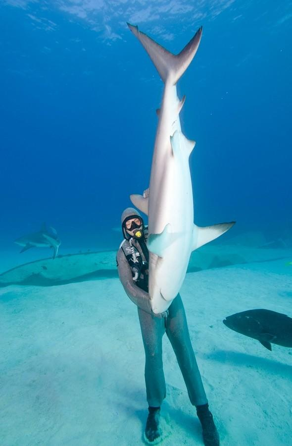 The shark whisperer: Diver has 'Jaws' eating out of her hands