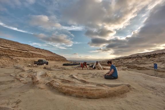Researchers have discovered dozens of fossilized skeletons of marine animals in what was once an ancient tidal flat in northern Chile.