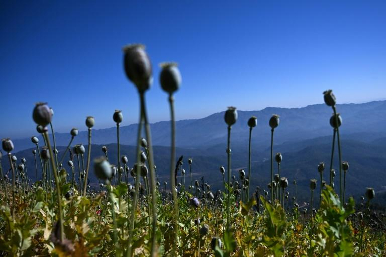 The poppy-covered hills of Myanmar's Shan state provide an ideal location for illicit meth labs