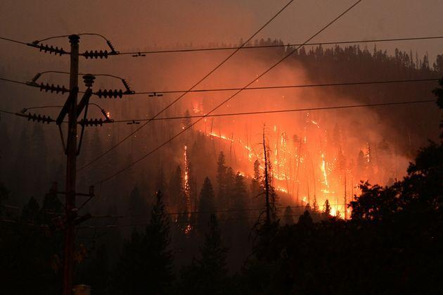 Pine trees burn as the Dixie Fire rages in Twain, California, on Monday. (Photo: ROBYN BECK/AFP via Getty Images)