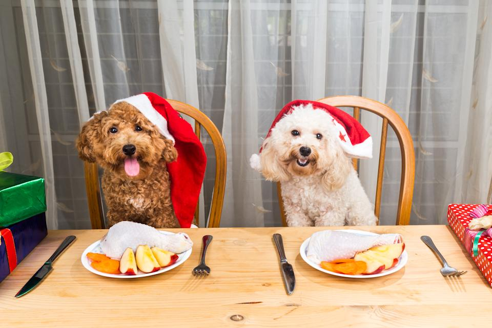 Two dogs wearing Christmas hats sitting at table with apples and chickens on plate in front of them.