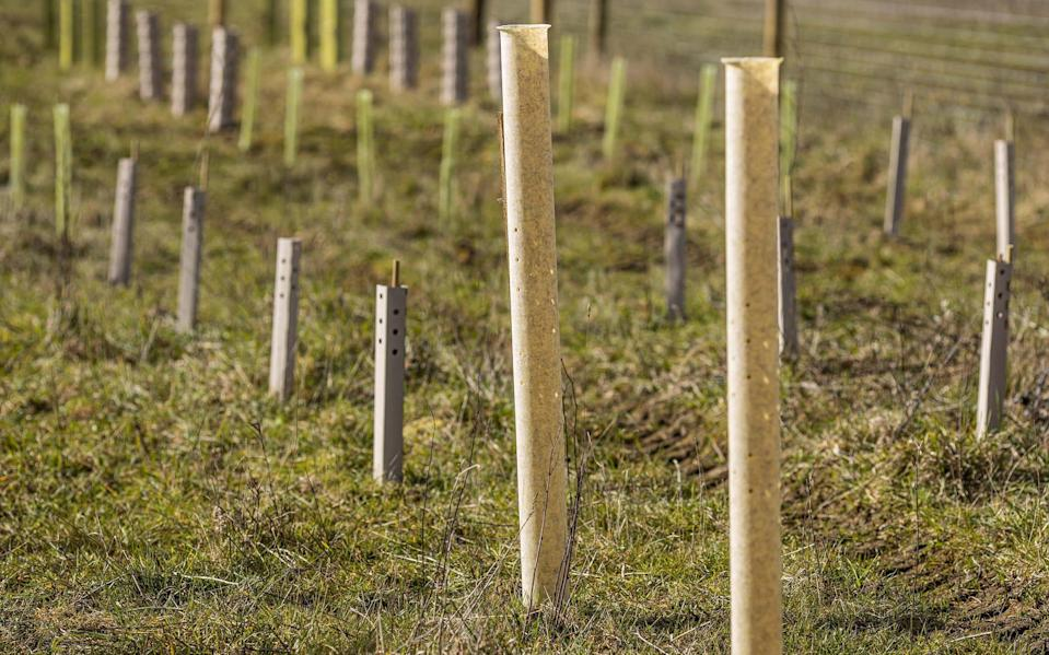 NexGen tree shelters installed on a site to protect saplings - INGA K