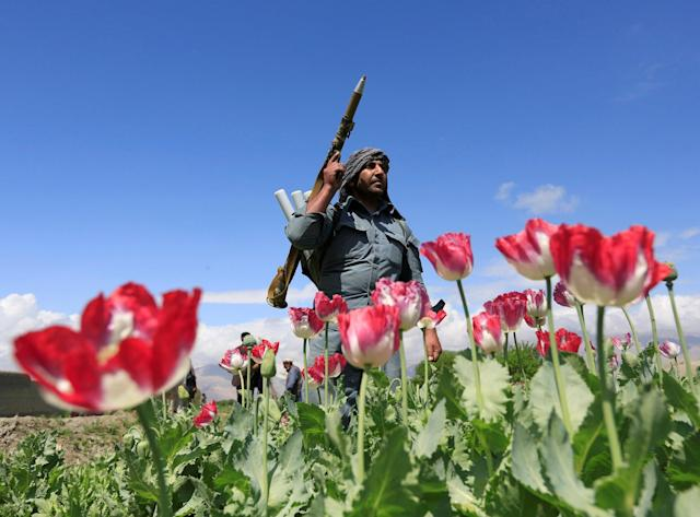 An Afghan policeman destroys poppies during a campaign against narcotics in Jalalabad province, Afghanistan, April 4, 2017. (Photo: Parwiz/Reuters)