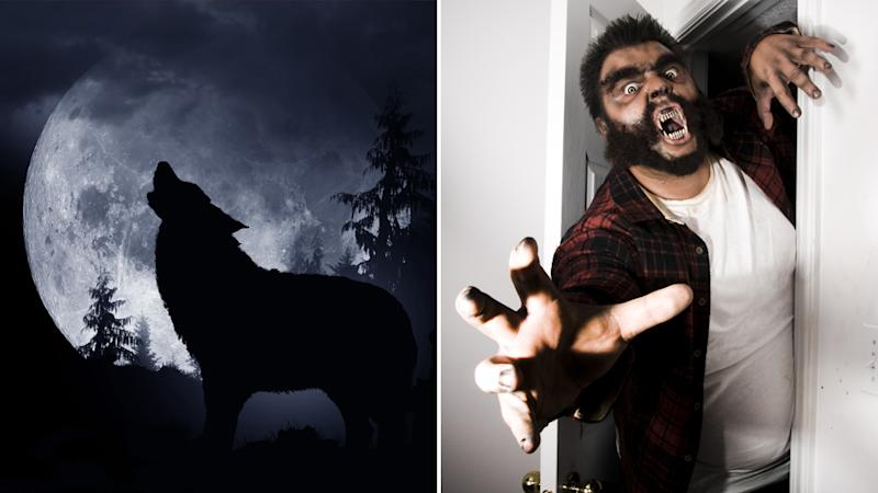 Two photos show a wolf howling at the moon and a man dressed as a werewolf.