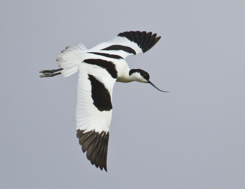 The avocet is the symbol of the RSPB, which welcomed the designations (Natural England/PA)