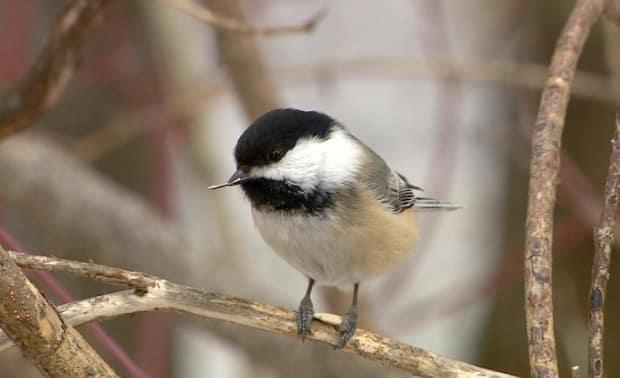 The Great Backyard Bird Count can be done from the comfort of your own home and the data can be submitted online.