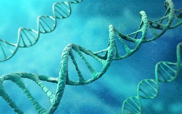A piece of non-coding DNA may hold the key to how humans could regenerate body parts