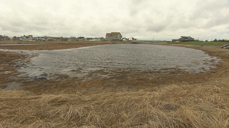 Parlee Beach tourist season approaches with no action on water quality