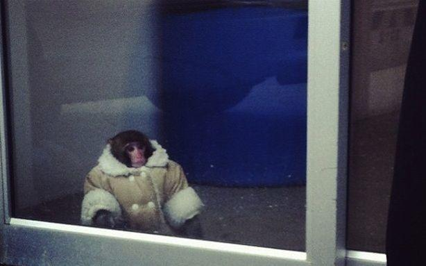 The Ikea Monkey Is Looking for a Home