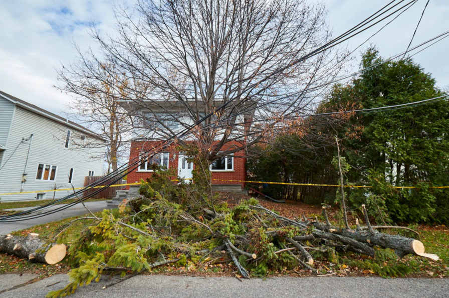 Downed trees Hydro Quebec