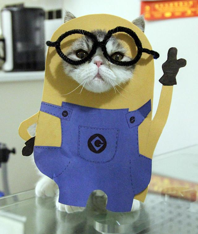 """<p>Snoopy dressed up as Bob from the Minions. """"It's really great to know the cats can bring a smile to so many people's faces around the world."""" (Photo: DailySnoopy/Caters News) </p>"""