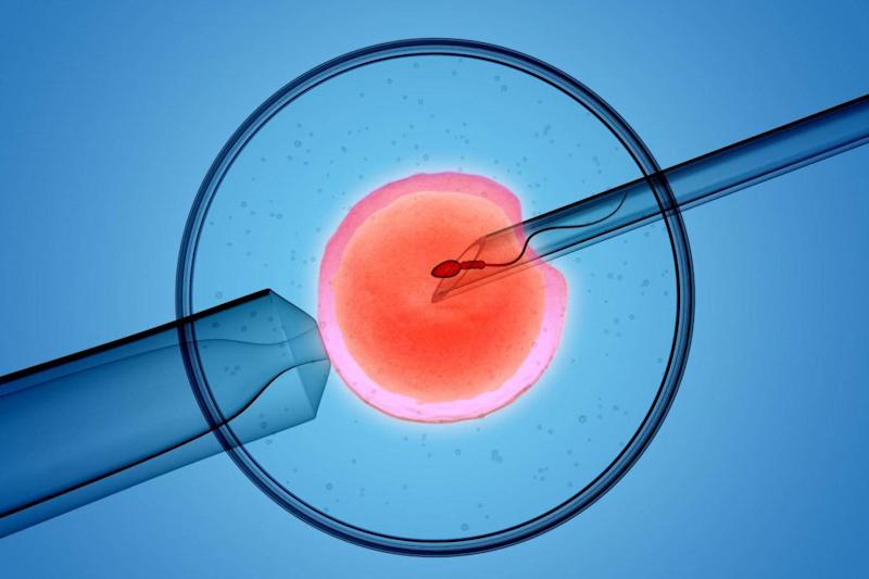 This year marks four decades since the first successful IVF took place