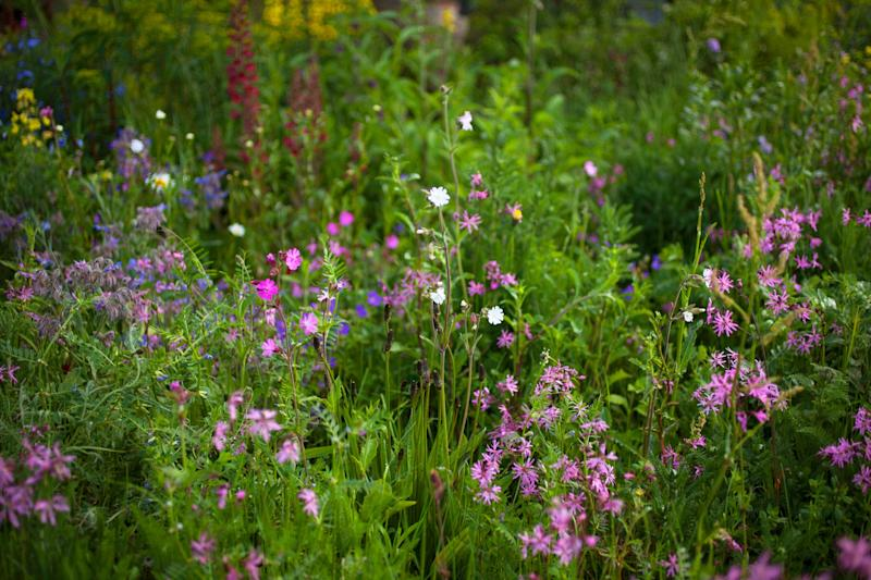 Campion and ragged robin on the Resilience Garden, designed by Sarah Eberle.