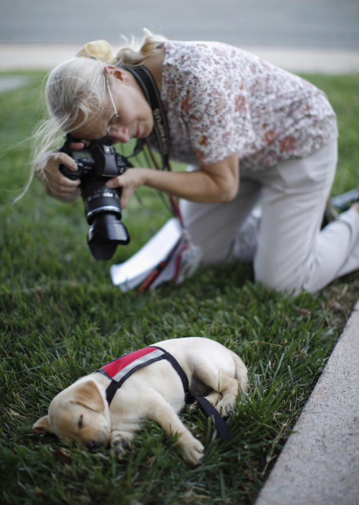 """A photographer takes a picture of a sleeping labrador puppy """"Hoey"""", named in honor of September 11, 2001 attack victim Patrick Hoey who died in the World Trade Center, in this picture taken on the grounds of the Pentagon near Washington, June 28, 2011. Hoey is part of the Transportation and Security Administration (TSA)'s Puppy Program where young dogs are raised to be used as future bomb sniffers at air cargo facilities nationwide. The tenth anniversary of the September 11, 2001 attacks will be commemorated this year. (REUTERS/Jason Reed)"""