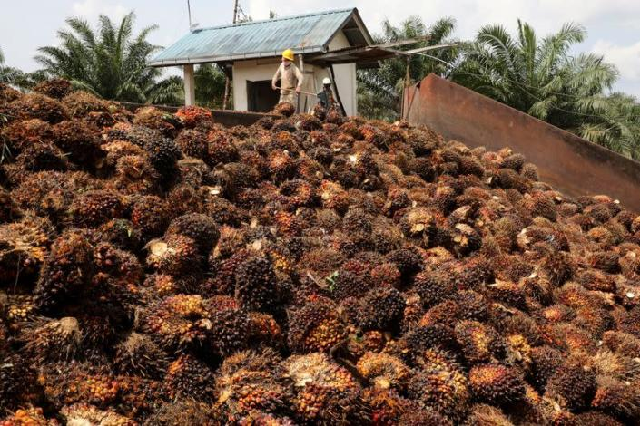 Workers handle palm oil fruits at a plantation in Slim River