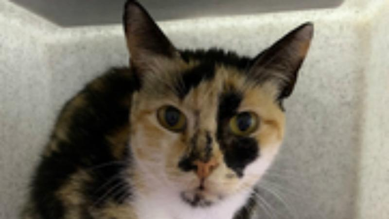 Stowaway cat Izzy seeks new home after surviving 12-day voyage from Israel