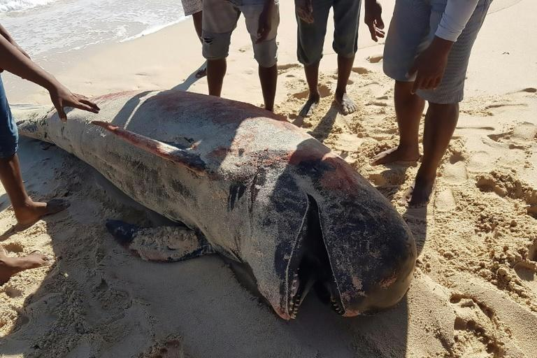 The ten whales were found in the remote province of East Nusa Tenggara, officials told AFP