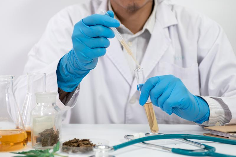 A researcher in a white lab coat and gloves analyzing a sample of dried cannabis flower.