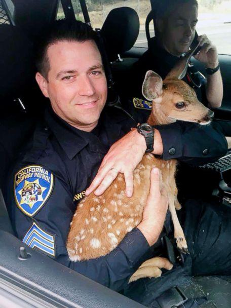 PHOTO: Sergeant David Fawson of the California Highway Patrol holds a month-old fawn that was located by Cal Fire without a mother inside the Carr Fire line near Redding, Calif. Sawson evacuated the deer to safety for care with a wildlife rescue. (California Highway Patrol via AP)