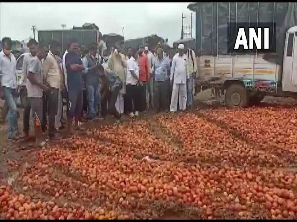 Visual of farmers with the dumped tomatoes on road (Photo/ANI)