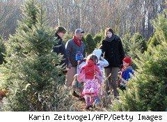 Cost of Christmas: Are Live Trees or Artificial the Better Deal?