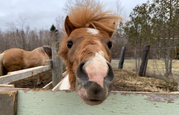 A new support group in Grand Falls-Windsor combines connections with peer leaders and horses. (Garrett Barry/CBC - image credit)
