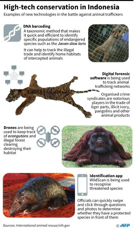 Graphic on hi-tech conservation measures deployed in Indonesia. For an AFP Focus moving March 11
