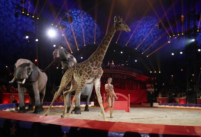 As France dithers, Paris moves to ban wild animals from circuses