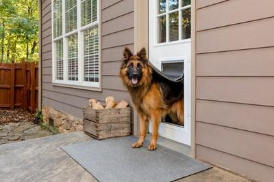 Give Your Dog a Door That's Energy Efficient for Your Home