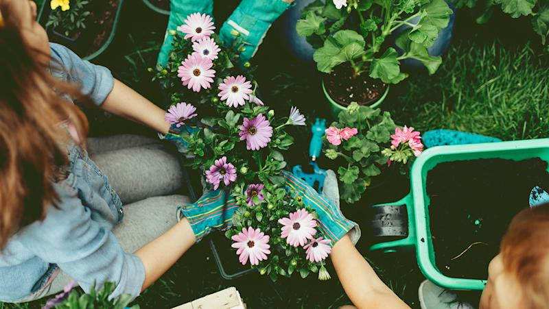 These are the best places to buy spring bedding plant bundles online. (Getty Images)