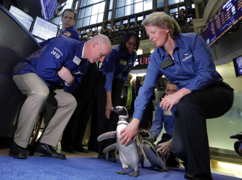 Trader John O'Hara, left, greets penguins from SeaWorld as they walk the trading the trading floor of the New York Stock Exchange for the company's IPO, Friday, April 19, 2013, in New York. Penguin handler Lauren DuBois kneels, at right. The broad Standard & Poor's 500 index opened higher early Friday. (AP Photo/Richard Drew)
