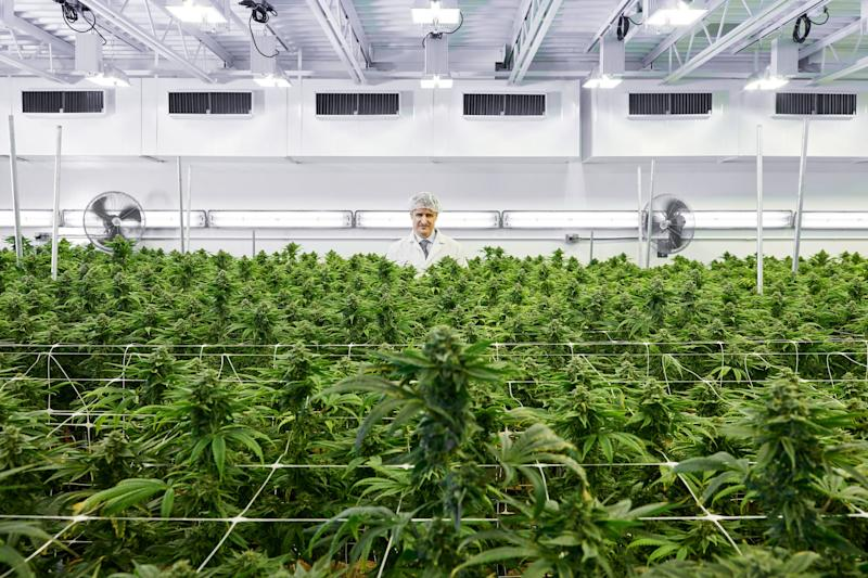 Privateer To Release Tilray Shares Over Next Two Years