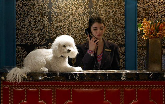 At many Kimpton hotels in the US, there's a nightly wine reception which guests bring their pets to. Source: Kimpton