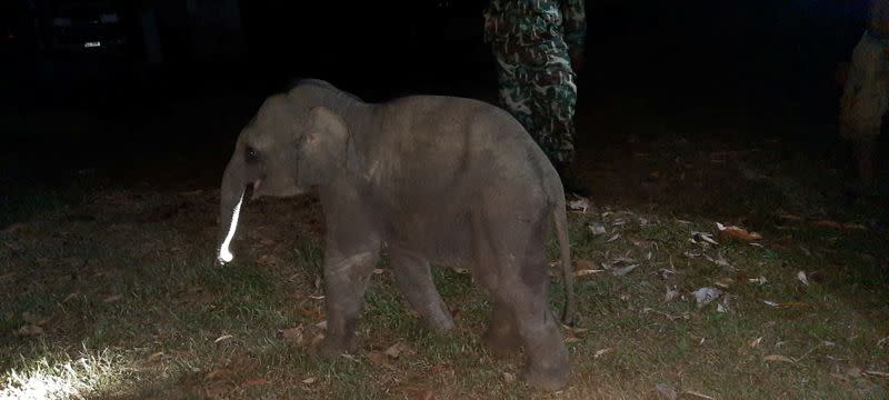 A baby elephant is seen after having received a CPR by a rescue worker after a motorcycle crash in Chanthaburi province