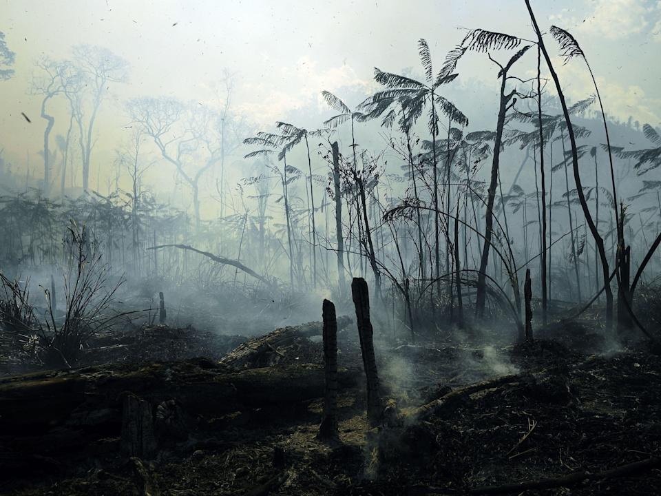 Fires burned areas of the Amazon rainforest last summer (AFP via Getty Images)