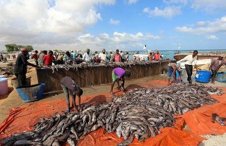 Fishermen prepare fish from their vessels on the shores of the Gulf of Aden in Bosasso, northern Somalia's breakaway Puntland region
